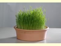 Bild für Eschenfelder Keimschale Edelstahl Weizengrassieb Sieb 23 cm