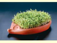 Bild für Eschenfelder Römertopf Saatschale Kresse-Igel mit Kressesaat