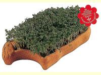 Bild für Eschenfelder Saatschale Kresse Lamm Geschenkset mit Kressesaat